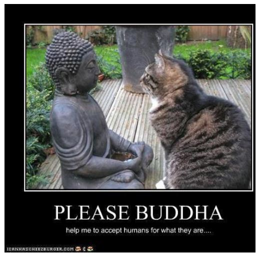 delmita buddhist personals Please select a category below, and optionally a city in texas, then click search.